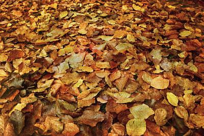 Autumn Carpet Poster by Vittorio Chiampan
