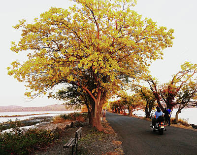 Autumn Causeway Poster