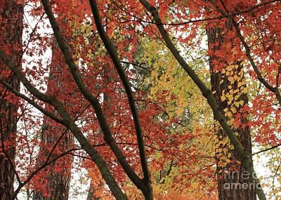 Autumn Color In Spokane Poster by Carol Groenen