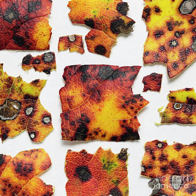 Autumn Color Leaves Poster by Masako Metz