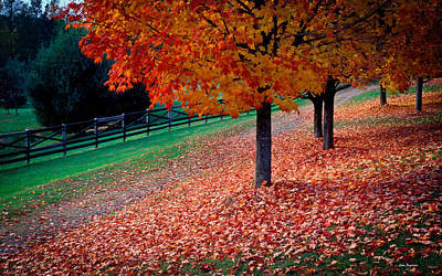 Autumn Colors Poster by John Pagliuca