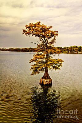 Autumn Cypress Poster by Scott Pellegrin