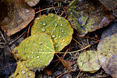 Autumn Dew Poster