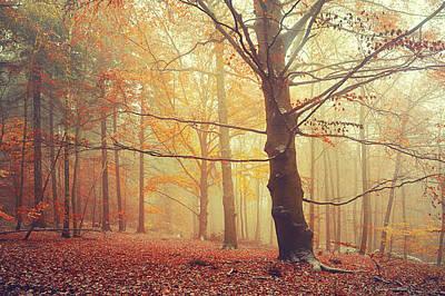 Autumn Dreams Of Oak Tree 1 Poster by Jenny Rainbow