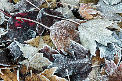 Poster featuring the photograph Autumn Ends, Winter Begins 1 by Linda Lees