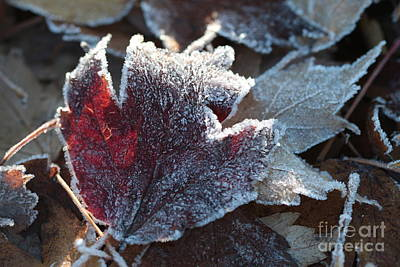 Poster featuring the photograph Autumn Ends, Winter Begins 2 by Linda Lees