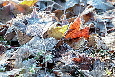 Poster featuring the photograph Autumn Ends, Winter Begins 3 by Linda Lees