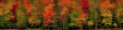 Autumn Fence Line Poster by David Patterson
