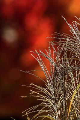 Autumn Fire - 2 Poster