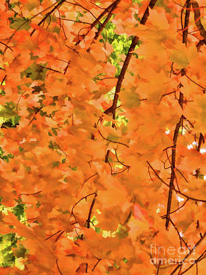 Autumn Foliage 3 Poster by Lanjee Chee