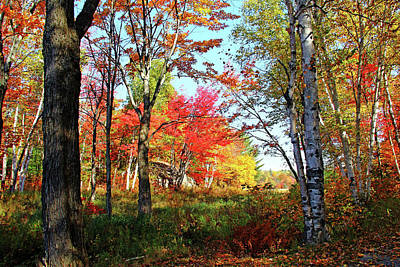 Poster featuring the photograph Autumn Forest by Debbie Oppermann