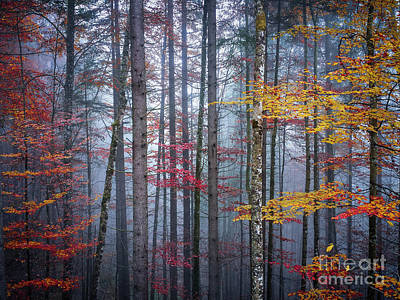 Autumn Forest In Fog Poster by Elena Elisseeva