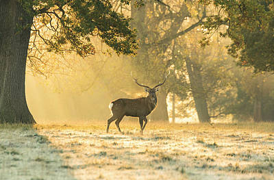 Poster featuring the photograph Autumn Frost by Scott Carruthers
