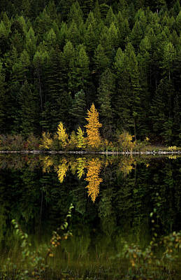 Poster featuring the photograph Autumn Gold // Whitefish, Montana  by Nicholas Parker
