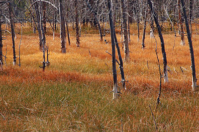 Autumn Grasses In Yellowstone Poster