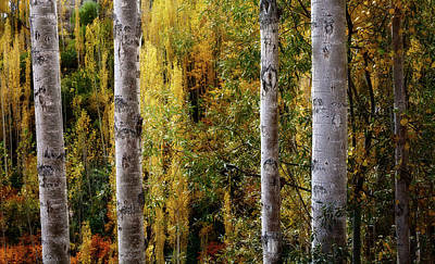 Autumn In A Jungle Poster