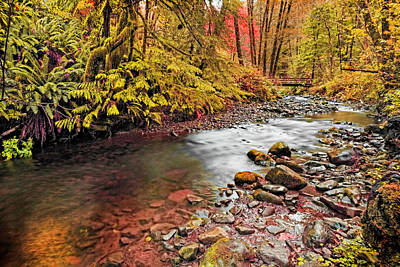 Autumn In An Oregon Rain Forest  Poster