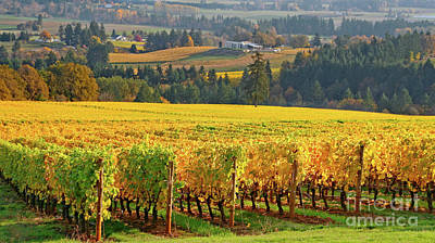 Autumn In Oregon Wine Country Poster