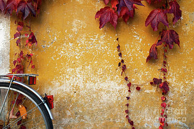 Poster featuring the photograph Autumn In Red by Yuri Santin