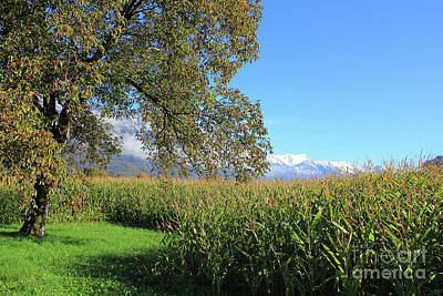 Autumn In Swiss Mountain Landscape Poster
