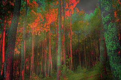 Poster featuring the photograph Autumn In The Magic Forest by Mimulux patricia no No