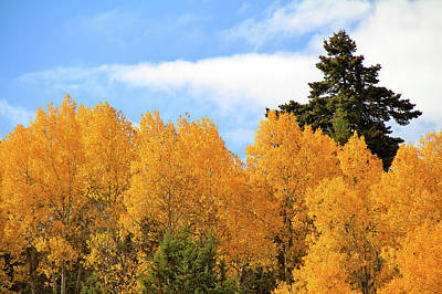 Autumn In The Owyhee Mountains Poster