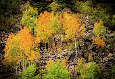 Autumn In The Uinta Mountains Poster by TL Mair