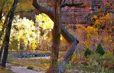 Autumn In Zion Poster
