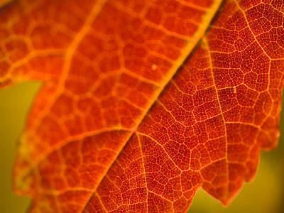 Autumn Intensity Poster