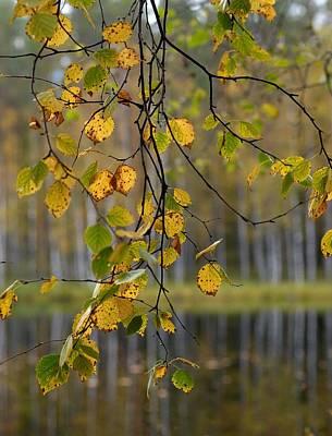 Autumn  Poster by Jouko Lehto