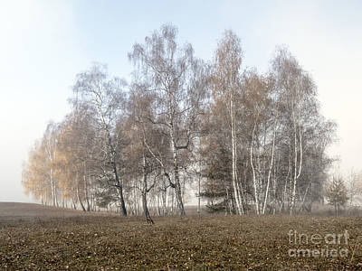 Autumn Landscape In A Birch Forest With Fog Poster by Odon Czintos