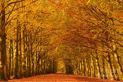 Autumn Lane In An Orange Forest Poster