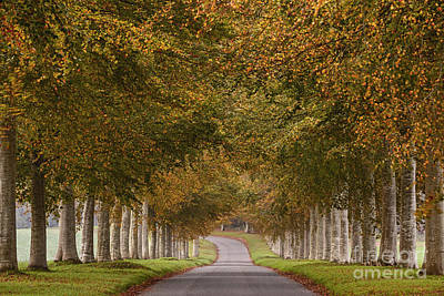 Autumn Lane Poster by Richard Thomas
