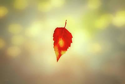 Autumn Leaf Poster by Bob Orsillo