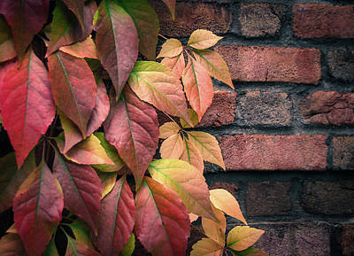 Autumn Leaves Against Brick Wall Poster