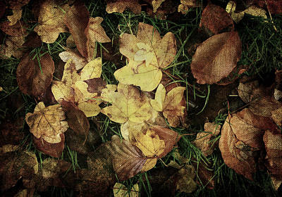 Autumn Leaves Are Falling Down... Poster by Vittorio Chiampan