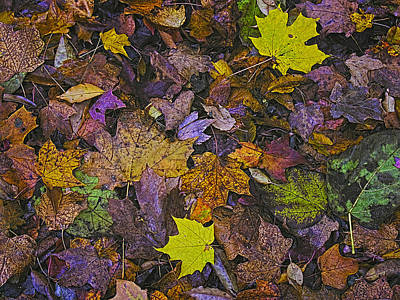 Autumn Leaves At Side Of Road Poster