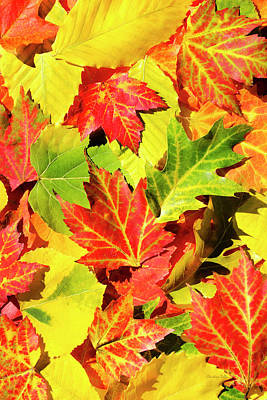 Poster featuring the photograph Autumn Leaves by Christina Rollo