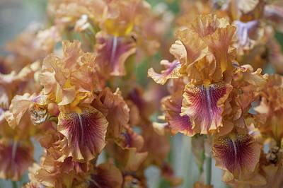 Autumn Leaves Irises In Garden Poster