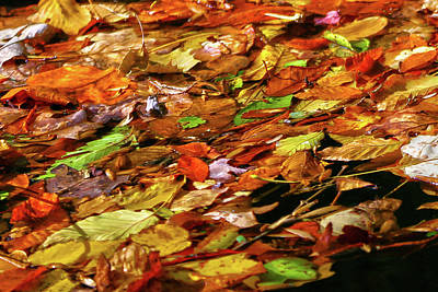 Poster featuring the photograph Autumn Leaves by Mitch Cat
