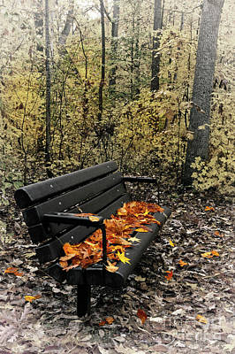 Poster featuring the photograph Autumn Leaves On A Bench by Dan Carmichael