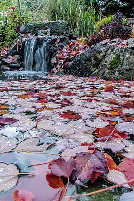 Autumn Leaves On The Pond Poster by Mick Anderson