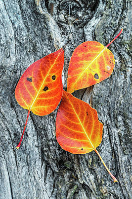 Autumn Leaves On Tree Bark Poster