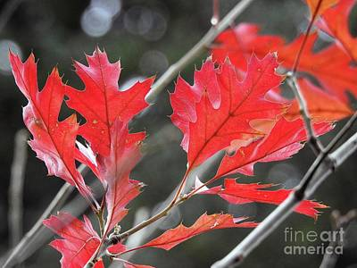 Poster featuring the photograph Autumn Leaves by Peggy Hughes