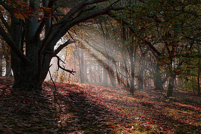 Poster featuring the photograph Autumn Light  by Scott Carruthers