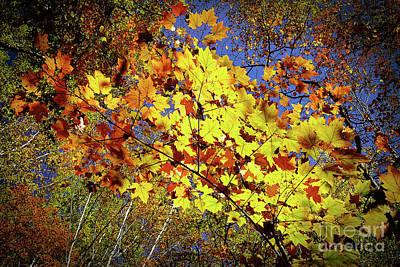 Autumn Light Poster by Tatsuya Atarashi