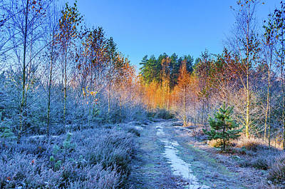 Poster featuring the photograph Autumn Meets Winter by Dmytro Korol