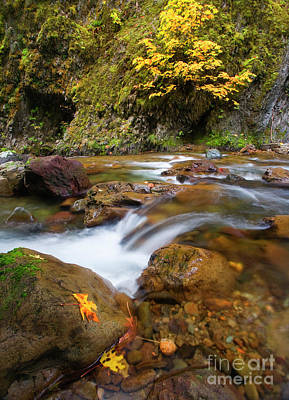 Poster featuring the photograph Autumn Moment by Mike Dawson