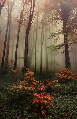 Autumn Mornin In Forgotten Forest Poster