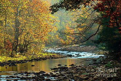 Autumn Morning Williams River Poster